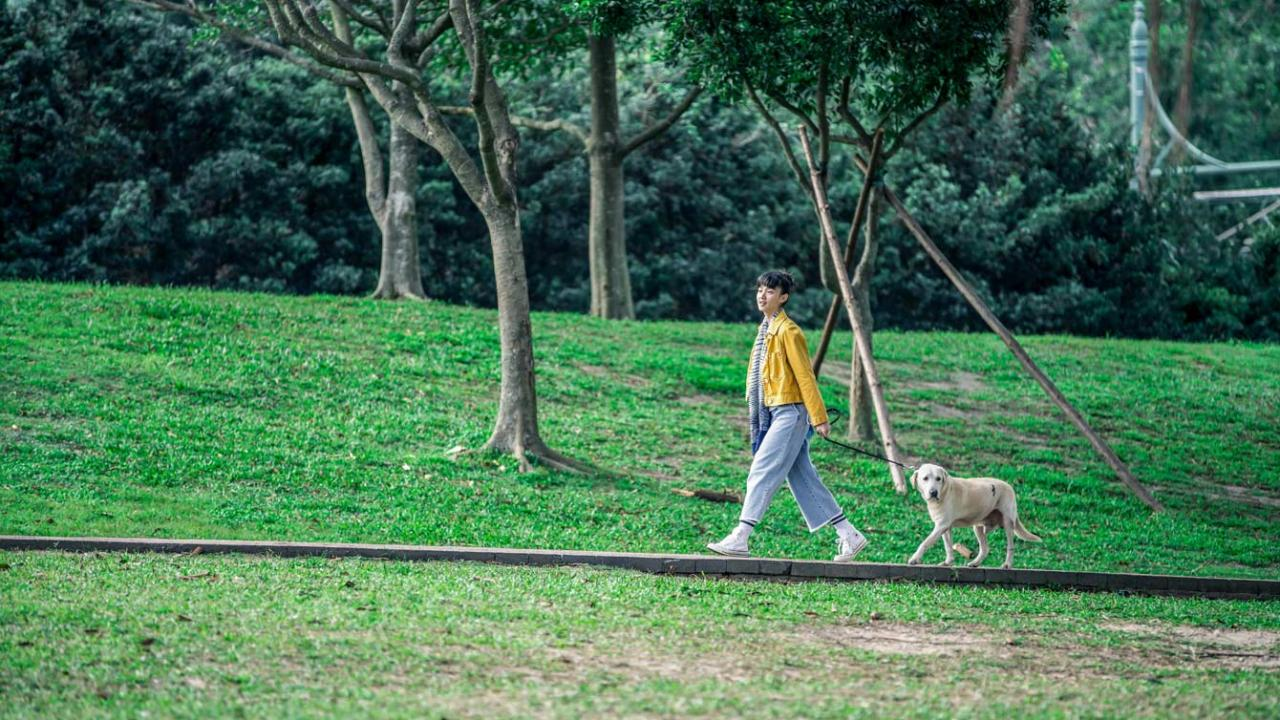 LITTLE Q movie, golden retriever puppy and owner walk through park